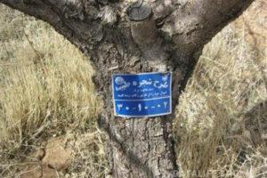 پلاک کوبی سنتی درختان