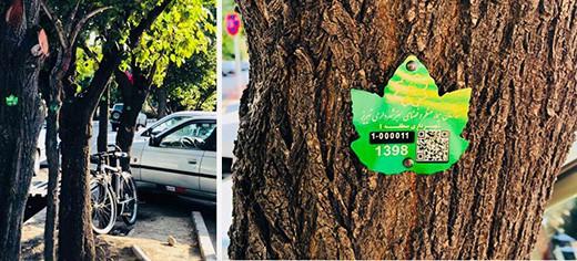 پلاک کوبی درختان تبریز